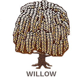 Donor Trees - Willow